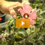 pet poisonous plants