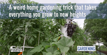 A weird home gardening trick that takes everything you grow to new heights