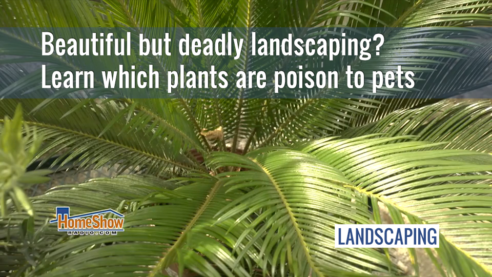 Keep pets safe from poisonous plants