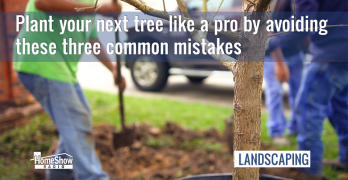 Tree planting tips from RCW Nurseries