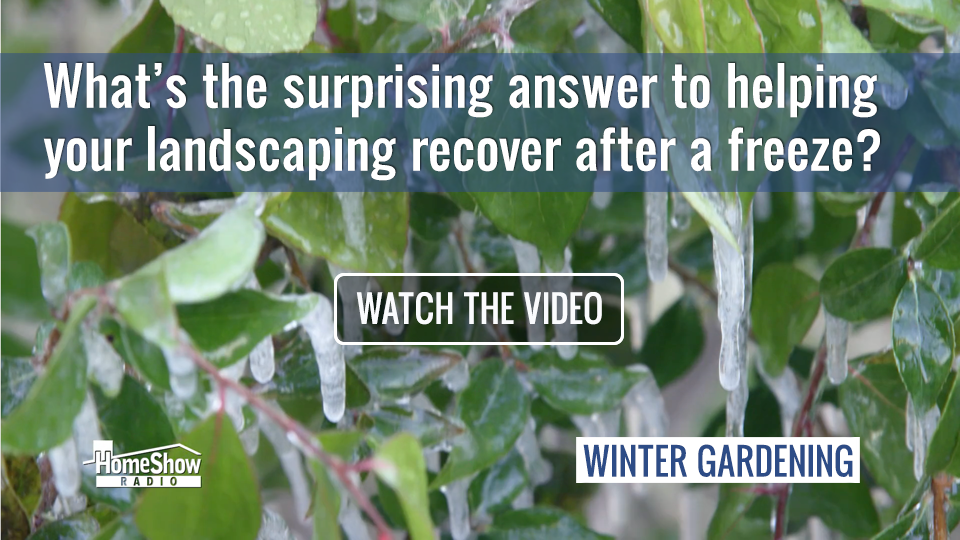 Landscape Freeze Recovery