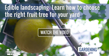 Fruit Trees Tom trusts come from RCW Nurseries