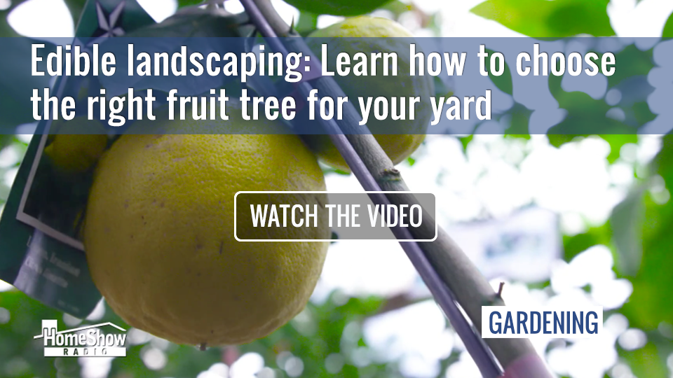 Fruit trees are edible landscaping—if you choose the right ones