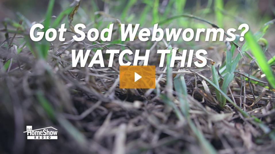 Get Rid of Sod Webworms